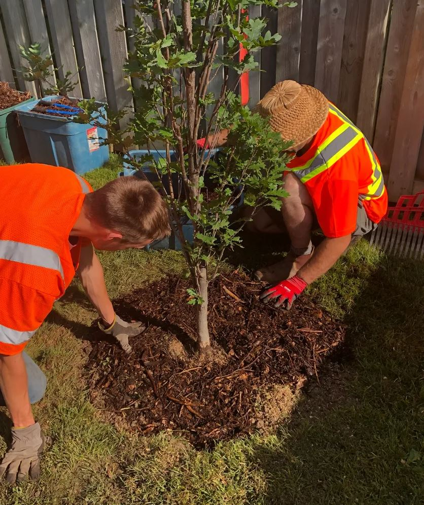 A Better View Tree Service - Services