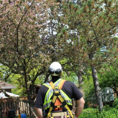 A Better View Tree Service - Kingston
