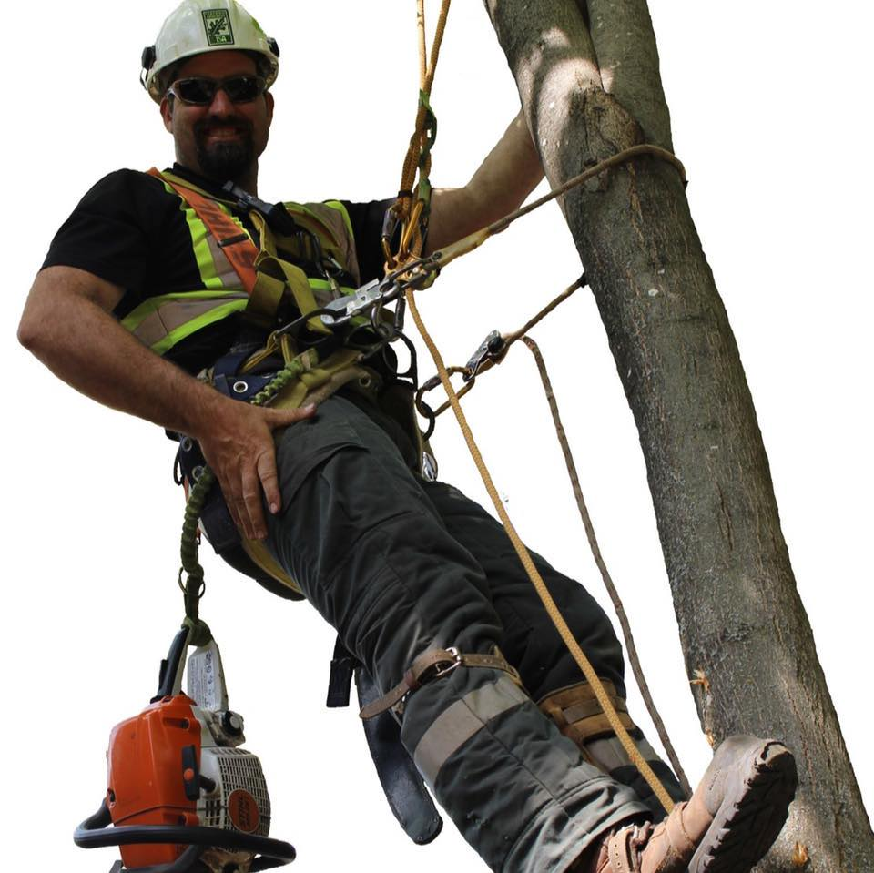 A Better View Tree Service - ISA Certified Arborists