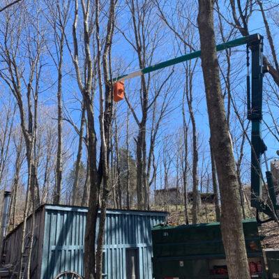 A Better View Tree Service - Kingston
